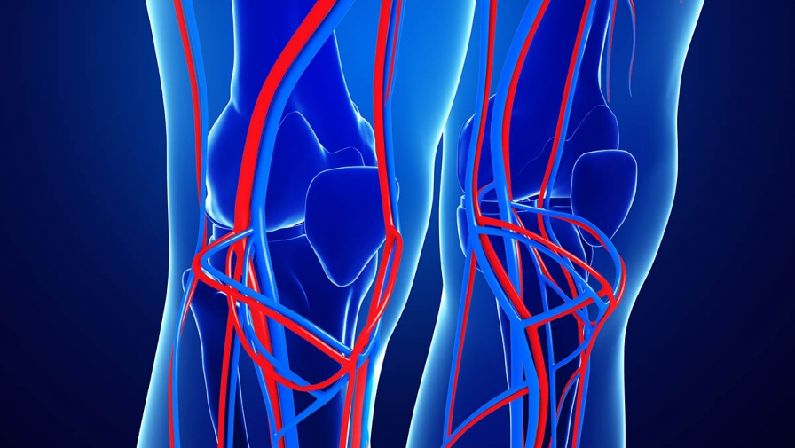 In-House Vascular and Ultrasound