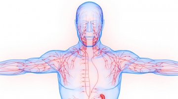 How In-House Vascular Ultrasound Works: Benefits, Limitations & More
